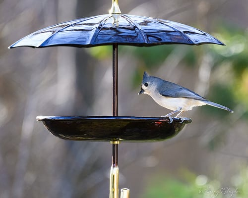 how to attract birds to your bird feeder